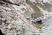 Sightseers aboard rowing boats enjoy the cherry trees that line the moat of a public park area in Tokyo, Japan on 31 March, 2010.