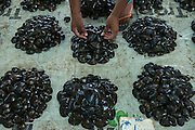 Bivalves for Sale (Kai)<br /> Suva Sea Food Market<br /> Suva<br /> Viti Levu<br /> Fiji. <br /> South Pacific