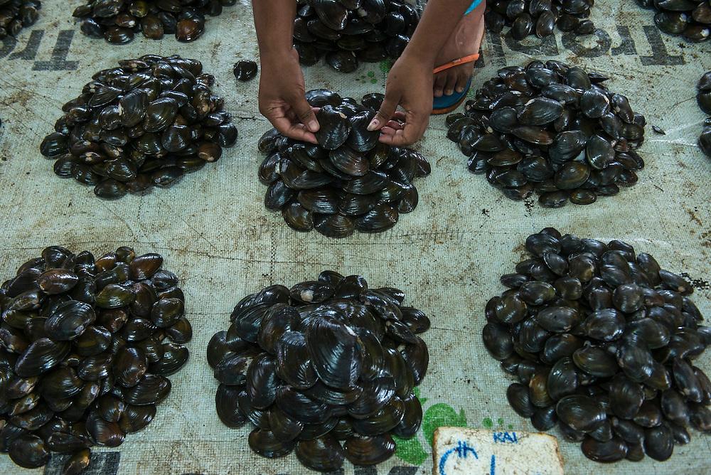 Bivalves for Sale (Kai)<br /> Suva Sea Food Market<br /> Suva<br /> Viti Levu<br /> Fiji. <br /> South Pacific