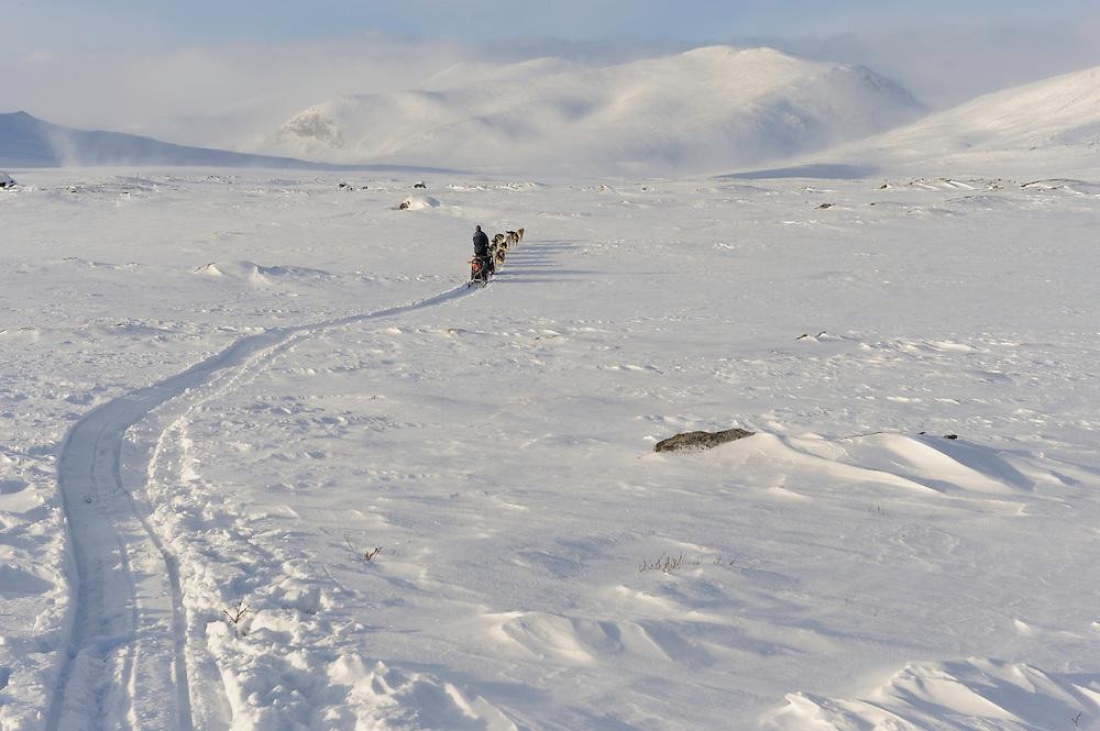 Dog sled, dovrefjell national park , norway, february,.