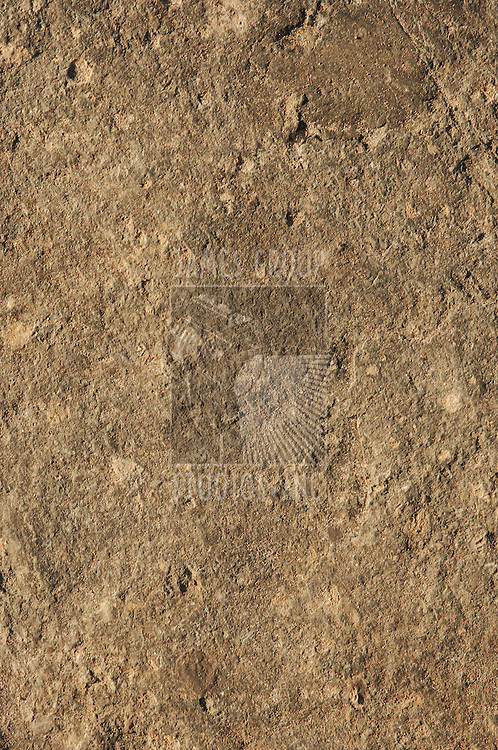natural earth-tone rock surface with rough, rustic texture