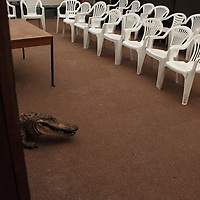 Two rows of white plastic chairs