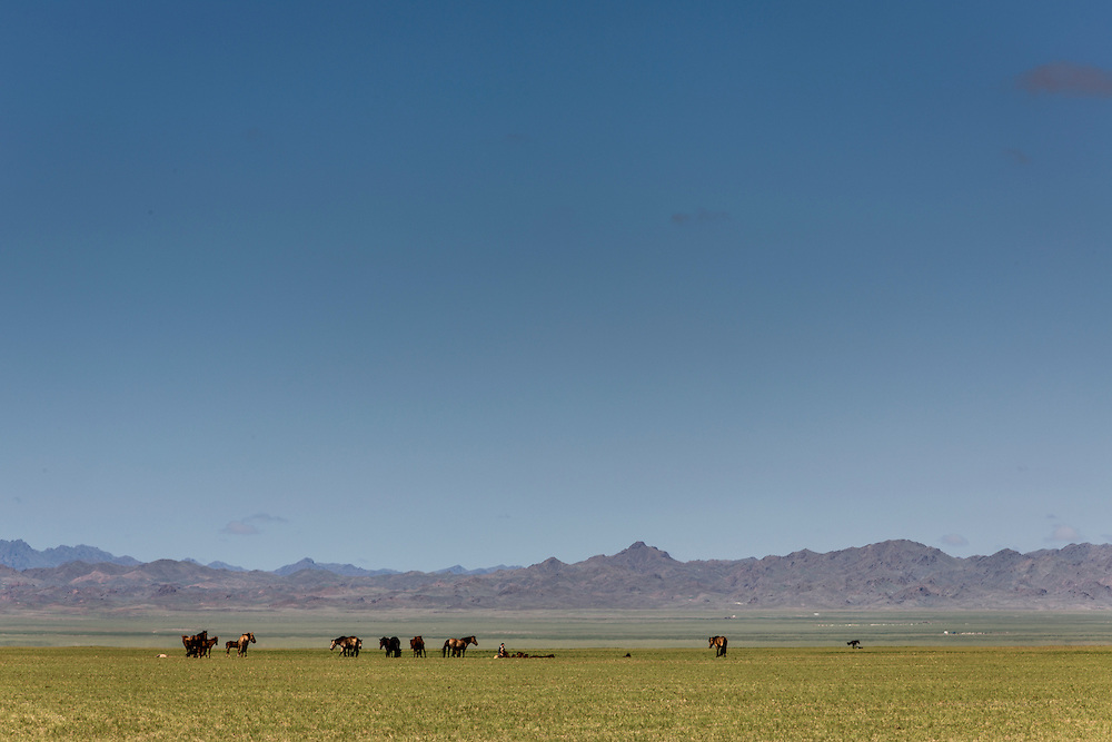 Horses graze on grass in the Gobi desert of Mongolia on July 28, 2012.  © 2012 Tom Turner Photography