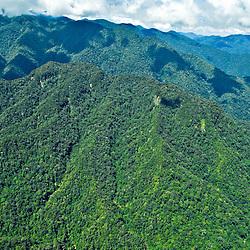 Rainforrest, Northern Sumatra, Indonesia.