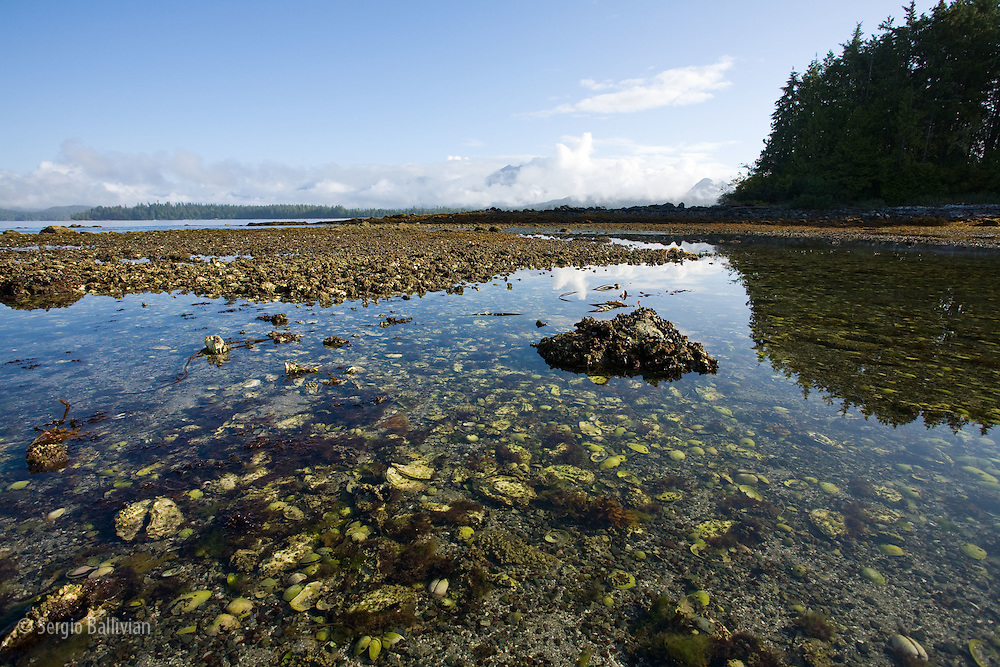 At low tide the sea bed is exposed and aquatic plants and animals are left exposed to the air which they have cleverly adapted to.