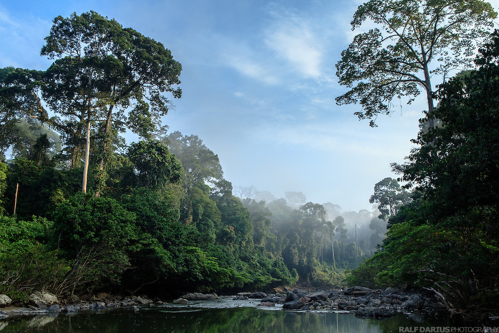 Rainforest scenery at the Segama river in the Danum Valley Conservationb Area (DVCA), Borneo - Malaysia