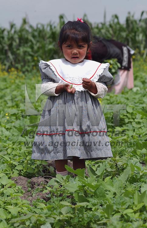 Jiquipilco, M&eacute;x.-Indigenas otomies recolectan la cosecha de ma&igrave;z, durante la temporada de lluvia en este municipio. Agencia MVT / Marco A. Castro. (DIGITAL)<br /> <br /> NO ARCHIVAR - NO ARCHIVE