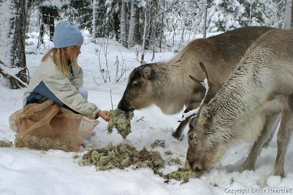 Sørsamisk reindrift i Nord-Trøndelag. Southsami reindeer herding in Mid-Norway. Luru reinbeitedistrik (Låarte Sijte).