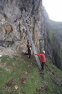 Grad students Martin Kristiansen and Dagfinn Breivik Skomsø position ladder hauled hundreds of meters up steep slope to conduct research along sheer cliffs of kittiwake colony on Blomstrand island; Kongsfjorden, Svalbard.