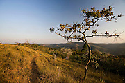 Itabirito_MG, Brasil...Paisagem de cerrado em Itabirito, Minas Gerais...The landscape with tropical savanna ecoregion in Itabirito, Minas Gerais...Foto: JOAO MARCOS ROSA / NITRO