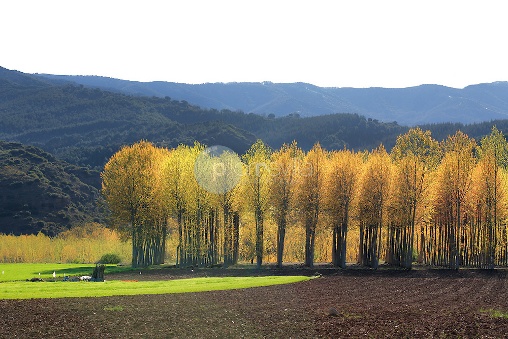 Chopera en el valle de Najerilla. La Rioja ©Daniel Acevedo / PILAR REVILLA