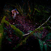 Owen Dudley gets low for the secret exit to a forest trail in Bellingham Washington.