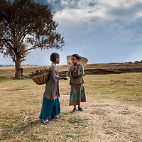 Young girls are required to carry heavy loads starting at a very young age. Near Motta, Ethiopia