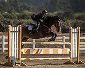 Horse No 54