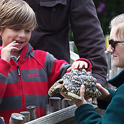 A young boy touches a tortoise at Wellington Zoo during a demonstration with a zoo keeper.  Wellington Zoo is New Zealand's first Zoo, having been established in 1906. Wellington Zoo became a charitable trust in 2003.  Daniell Street. Wellington, New Zealand, 23rd January 2011. Photo Tim Clayton..