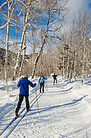 Three cross-country skiers on a groomed trail through a grove of Aspen trees near Sun Mountain Lodge, Methow Valley, Washington, USA.