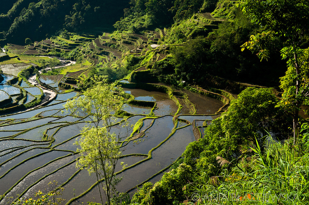 Philippines, Ifugao province. Banaue, Batad and Hapao are tiny villages hidden deep among the famous Ifugao, man-made rice terraces.