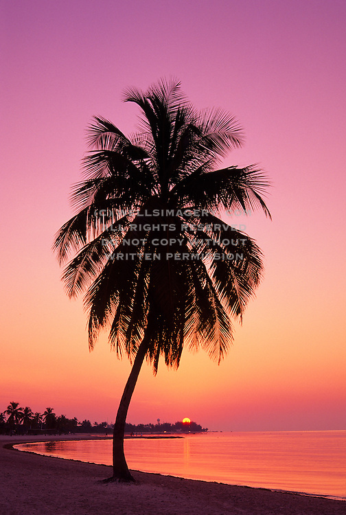 Florida Beach Sunset Palm Trees Image Of Tree On A In Key West