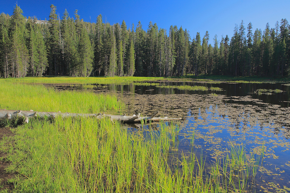 Alpine Pond - Tuolumne Meadows - Yosemite