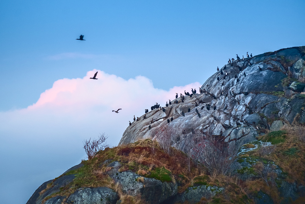 Of the world's about 9,000 bird species, around 300 have their natural habitat in Norway, and an additional number of around 200 rarer bird types are found at certain places and times of the year.