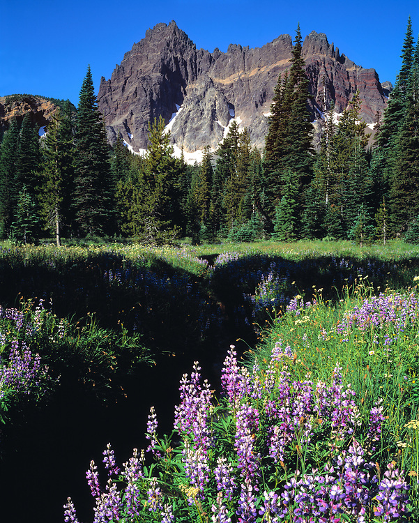 Purple lupine blooms foreground mighty Three Fingered Jack, in Oregon. ©Ric Ergenbright