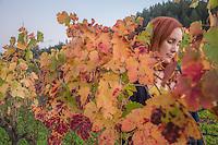 Cynthia Quispe blends into vineyard on her birthday near Saint Helena