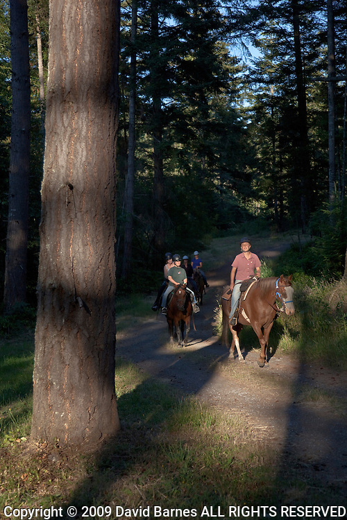 Horseback trail ride in forest
