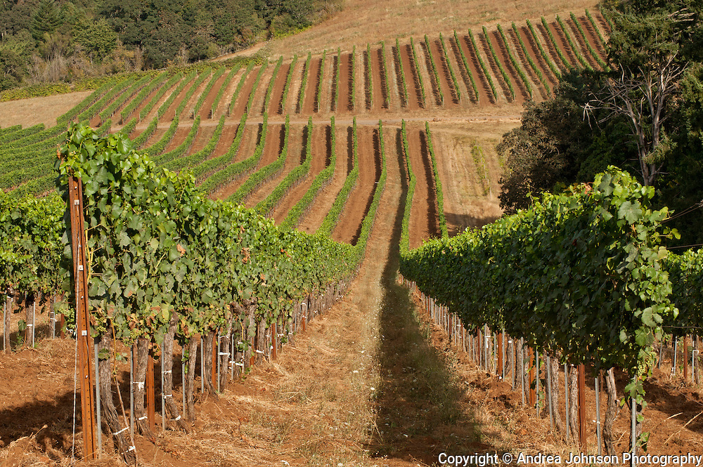 Evening Land Vineyards, Eola-Amity AVA, Willamette Valley, Oregon