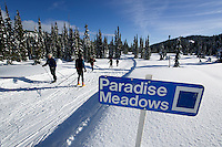 Cross Country skiers ski track set in Paradise Meadows near the Mt. Washington ski resort.  Comox Valley, Vancouver Island, British Columbia, Canada.