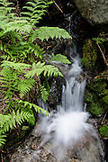 A creek tumbles by ferns along the Ingalls Creek Trail, in Wenatchee National Forest, between Leavenworth and Blewett Pass, in Washington, USA.