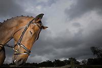 Horse's head outdoors