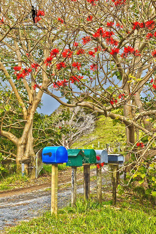 coral tree and letterboxes, owhiwa rd, whangarei heads
