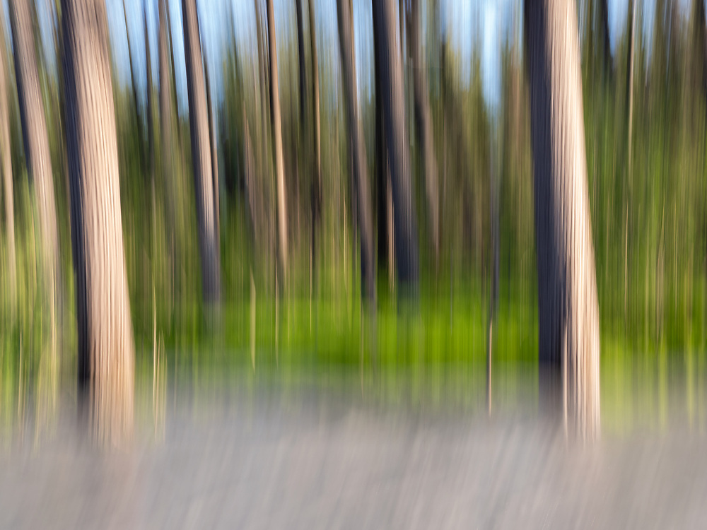 In-camera motion blur of forest and stream near Valdez in Southcentral Alaska. Summer. Evening.