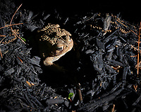 Toad. Image taken with a Leica CL camera and 18-55 mm, 55-135, or 11-23 mm lens.