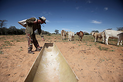 NAMIBIA GROOTFONTEIN 2MAY14 - Farmer Martinus van Blerk tends to his cattle on the Omega farm near Grootfontein, Namibia.<br /> <br /> The farm holds about 700 hear of cattle, mostly Brahman-Charolais cross breeds. <br /> <br /> <br /> <br /> jre/Photo by Jiri Rezac<br /> <br /> <br /> <br /> © Jiri Rezac 2014