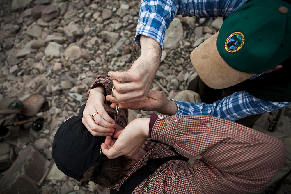 A male fly angler removes a fly from another fisherman's ear while fishing the Salmon River in New York