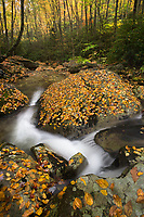 The waters of Upper Boone Fork snake through a headwater autumn landscape in Western North Carolina's Blue Ridge Mountains.  A heavy rainstorm the evening before dropped the leaves onto the wet rocks.
