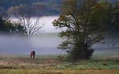 Kentucky Scenes, Horse Farms, Landscapes