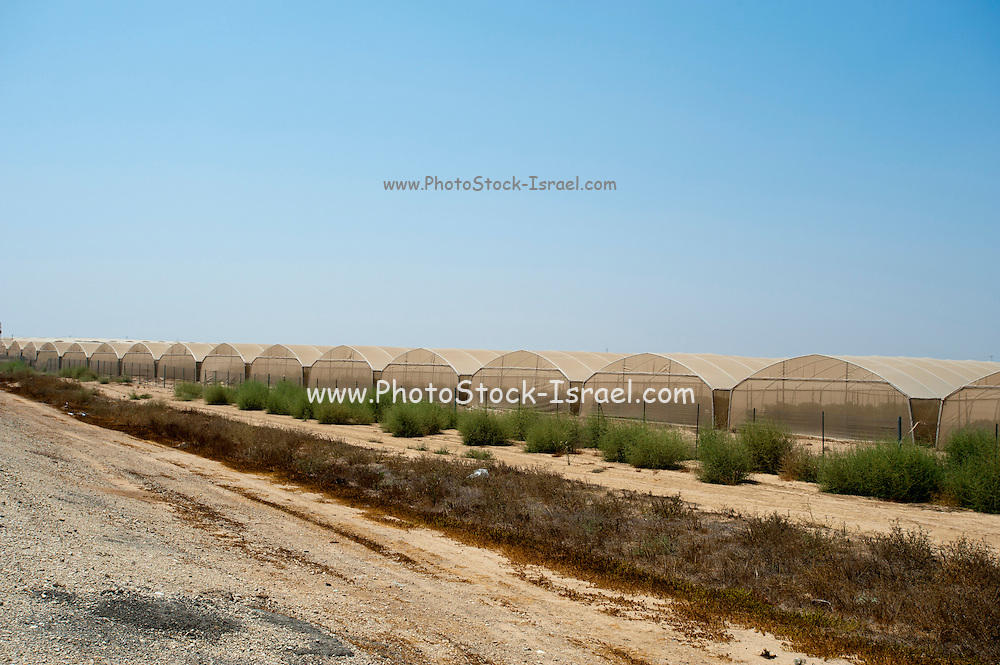 Israel, Aravah Desert Exterior of a tomato greenhouse