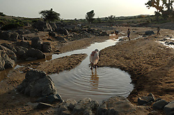 Coptic christians bath in what they believe is holy water in a river in Barentu, Eritrea August 29, 2006. They believe that the water cured a blind boy over 40 years ago and so they come here to make offererings, bath and pray.     (Photo by Ami Vitale)
