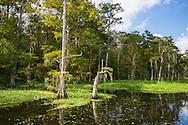 Near White Castle Louisiana