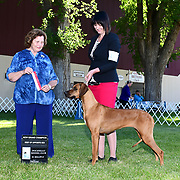 Pocatello Kennel Club 06/16/2019