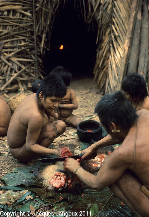 Elder of small group of semi-nomadic Hoti Indians cutting up meat of anteater hunted in rainforest, Guiana Highlands, Venezuela, South Ameica; the meat will be shared between members of the group.