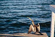 Long Jetty Central Coast Australia birds in the morning