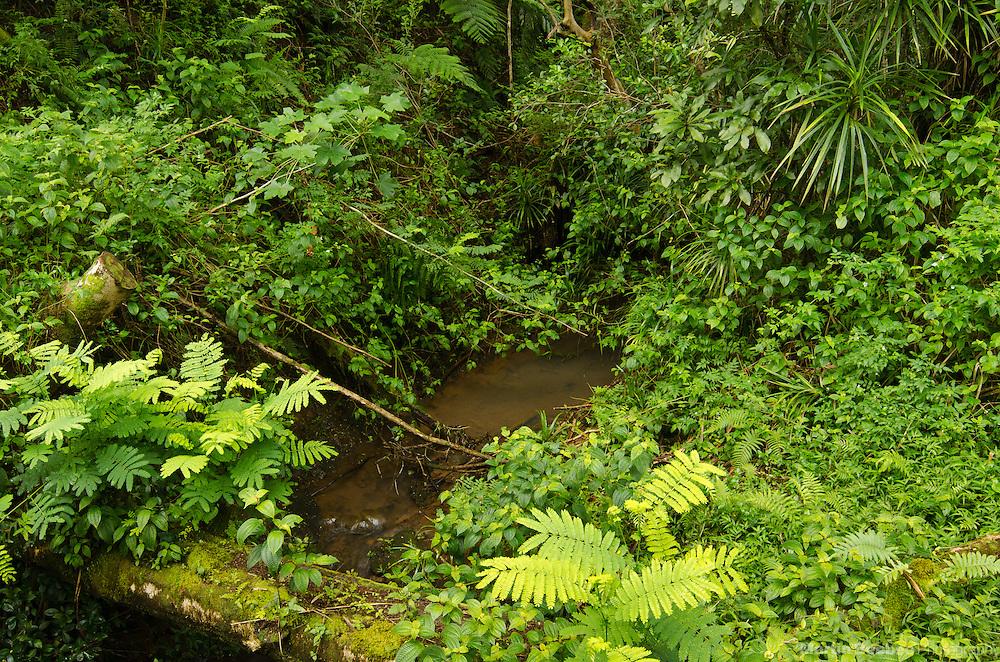 Opaeka'a Stream, Lihue-Koloa Forest Reserve, Kauai, Hawaii