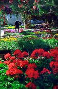 section des fleurs, marché Atwater avril 1996