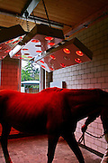"Switzerland, Uzwil, Health Balance clinic for animals....A horse resting and drying out under red lamps, after an aquatraining..session... The goldfish swims lazily between the fronds of fake seaweed, under the attentive gaze of the medical staff. ?When he came here he was moving all wrong. He swam crooked, he was almost upside-down,? explains Marisa Polanec, obviously enthusiastic at the result. For it appeared that the littlest in-patient at Health Balance, the Swiss clinic for animals, had been suffering from electrosmog poisoning. ..An unusual complaint, yes, but here, in the midst of the clinic?s futuristic architecture and the green hills of San Gallo canton, the concept of normality is done away with even before arriving at a diagnosis. That?s because, to identify the cause of the goldfish?s suffering, Urs Buehler ?kinesiologist and the centre?s founder, as well as the owner of an industrial colossus in the region ?simply asked it, by using his ever-present dowsing rod. .. The goldfish swims lazily between the fronds of fake seaweed, under the attentive gaze of the medical staff. ?When he came here he was moving all wrong. He swam crooked, he was almost upside-down,? explains Marisa Polanec, obviously enthusiastic at the result. For it appeared that the littlest in-patient at Health Balance, the Swiss clinic for animals, had been suffering from electrosmog poisoning. ..An unusual complaint, yes, but here, in the midst of the clinic?s futuristic architecture and the green hills of San Gallo canton, the concept of normality is done away with even before arriving at a diagnosis. That?s because, to identify the cause of the goldfish?s suffering, Urs Buehler ?kinesiologist and the centre?s founder, as well as the owner of an industrial colossus in the region ?simply asked it, by using his ever-present dowsing rod. ....Il pesciolino rosso nuota flessuoso tra le alghe finte, sotto lo sguardo attento di un ristretto staff medico. ""Quando è arrivato qui si muoveva in"