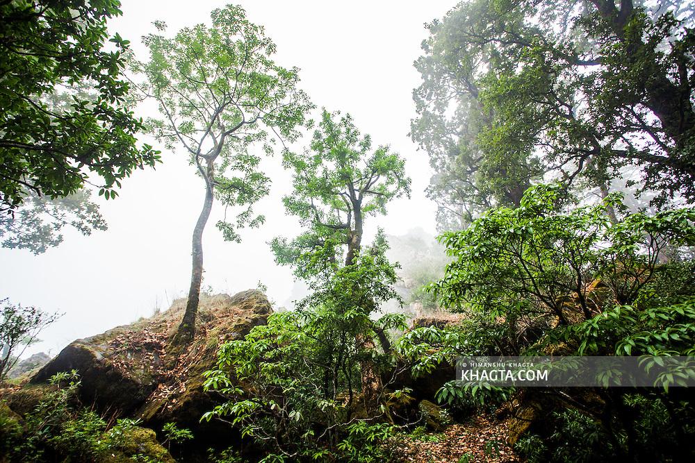 Climbing and Treking in the Outdoor in Nainital, Uttarakhand
