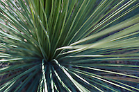 Close up of a desert shrub Arizona USA&#xA;<br />