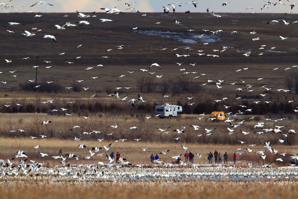 Birdwatchers at Freezout Lake, Montana.